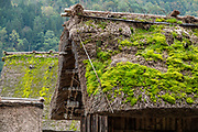 "Mossy roof. In Ogimachi, the peaceful Gassho-zukuri Minka-en Outdoor Museum displays farmhouses relocated from surrounding villages. Ogimachi is the largest village and main attraction of the Shirakawa-go region, in Ono District, Gifu Prefecture, Japan. Declared a UNESCO World Heritage Site in 1995, Ogimachi village hosts several dozen well preserved gassho-zukuri farmhouses, some more than 250 years old. Gassho-zukuri means ""constructed like hands in prayer"", as the farmhouses' steep thatched roofs resemble the hands of Buddhist monks pressed together in prayer. Their thick roofs, made without nails, are designed withstand harsh, snowy winters and to protect a large attic space that was formerly used to cultivate silkworms. Many of the farmhouses are now restaurants, museums or minshuku lodging."