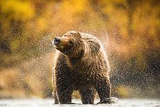 Alaska #3 2015