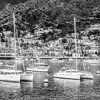 Catalina Island Avalon Bay black and white photo with moored boats and Avalon city businesses and houses. Avalon California is the largest city on Catalina Island off the coast of Southern California in the United States.