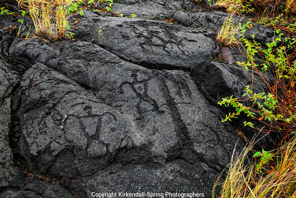 HI00255-00...HAWAI'I - Pu'u Loa Petroglyphs along the Chain Of Craters Road in Hawai'i Volcanoes National Park on the island of Hawai'i.