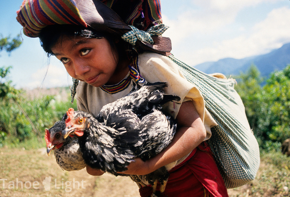 An Ixil Indian girl carries chickens from the market in Chajul, in the highlands of Guatemala, to her war ravaged village of Caba.