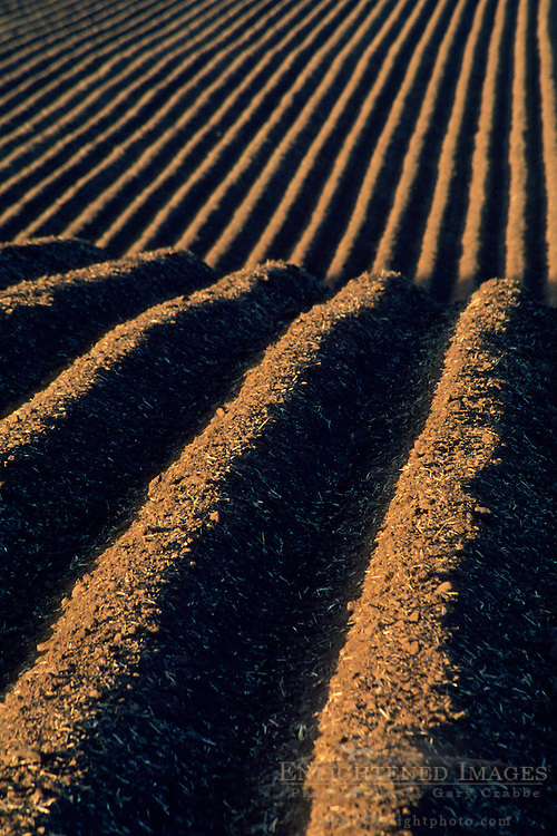 Plowed dirt rows in agricultural field, near Soledad, Monterey County, California