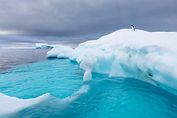 A lone adélie penguin sits on an iceberg near Useful Island, Antarctica.  Because it's so early in the season, the water is quite clear, and the ice below the surface turns the water aqua.