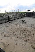 Turtle hatching program, Hotelito Desconocido Sanctuary Reserve & Spa,  Coastlegre, Jalisco, Mexico