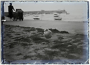 low angle view of an on the ground sitting seagull with mother walking and baby carriage in the background glass plate 1900s