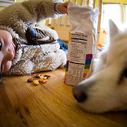 A child teases the family dog Anya with some goldfish in Eagle, CO.