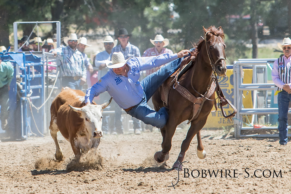 Steer wrestler John Franzen makes his run in the first performance of the Elizabeth Stampede on Saturday, June 2, 2018.