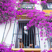 Marbella, Spain, is a city and resort area on southern Spain's Costa del Sol. During the evening hours, it's magical. Look up at those cute dogs!<br />