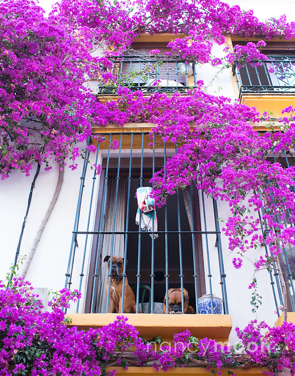 Marbella, Spain, is a city and resort area on southern Spain's Costa del Sol. During the evening hours, it's magical. Look up at those cute dogs!<br /> <br /> For all details about sizes, paper and pricing starting at $85, click &quot;Add to Cart&quot; below.