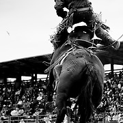 A cowboy tries in vain to hang on at the 2011 Augusta Rodeo.
