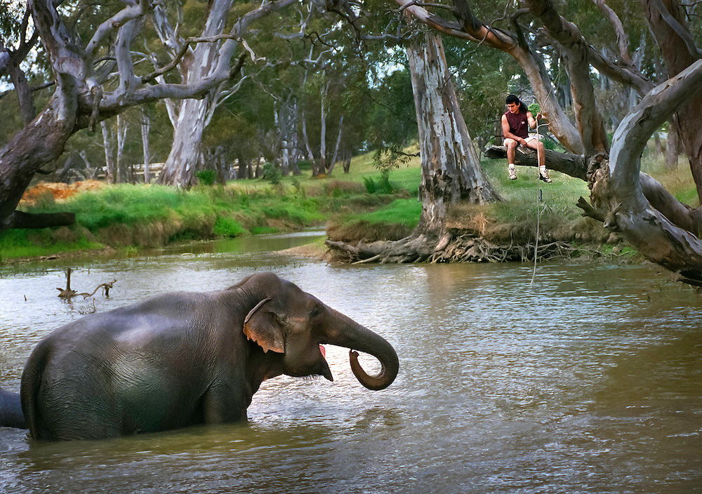 ashtons circus: 971127: avoca: pic - Craig Sillitoe : elephant trainer Brazil with Abu in Avoca. This photograph can be used for non commercial uses with attribution. Credit: Craig Sillitoe Photography / http://www.csillitoe.com<br />