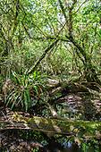 Florida Swampscapes