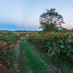 A farm road and tree at sunset in Middleborough, Massachusetts.