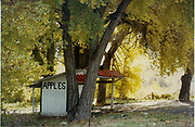 The apple stand is empty as the trees assume their bright yellow Fall colors.