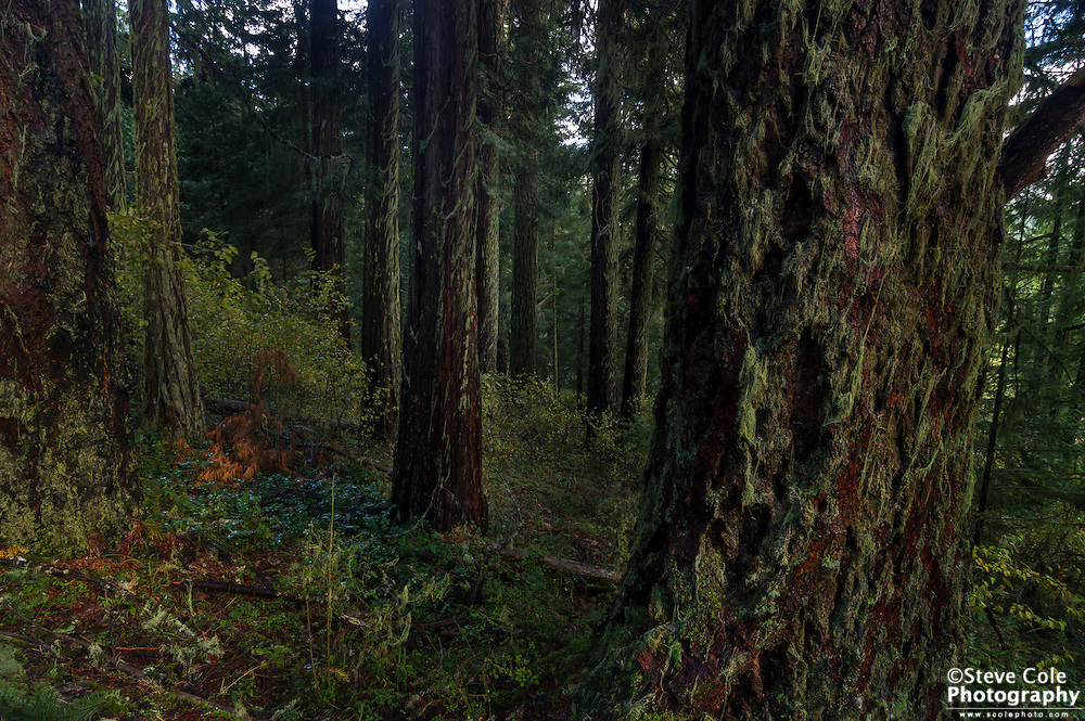 Can Can Timber Sale Unit N #1 - South Umpqua River