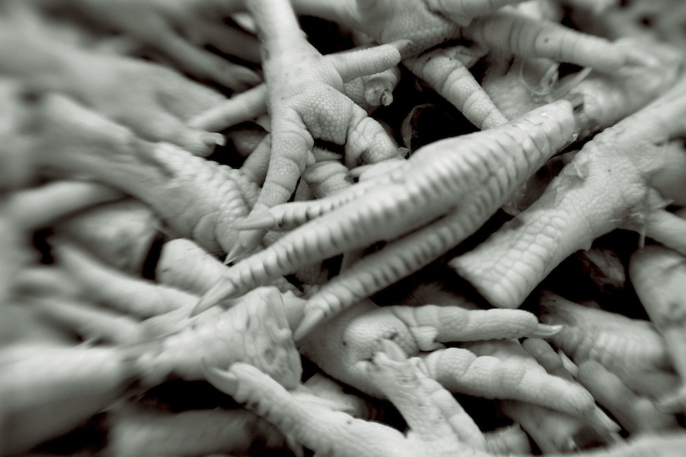 chicken feet in a pile,black and white verticle