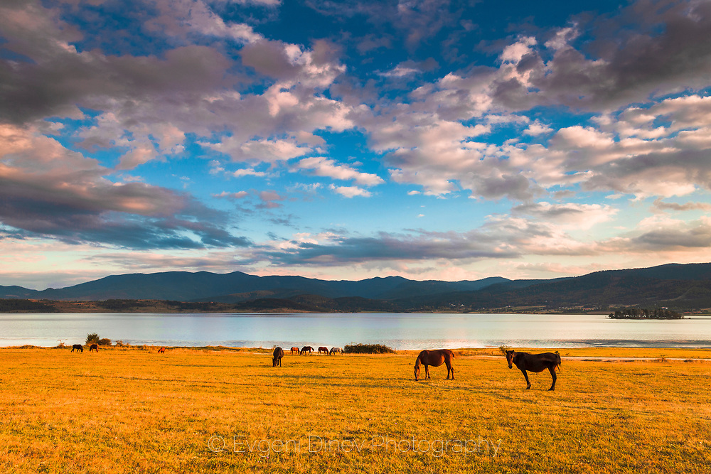 Horses grazing by the lake at the sunset