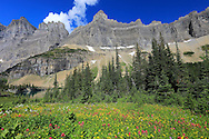 Alpine meadow of flowers in the Rocky Mountains along the trail to Iceberg Lake in Glacier National Park, Montana