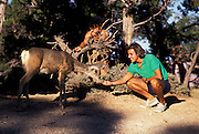 Person feeding Mule deer, So. Rim, Grand Canyon National Park, Arizona..Subject photograph(s) are copyright Edward McCain. All rights are reserved except those specifically granted by Edward McCain in writing prior to publication...McCain Photography.211 S 4th Avenue.Tucson, AZ 85701-2103.(520) 623-1998.mobile: (520) 990-0999.fax: (520) 623-1190.http://www.mccainphoto.com.edward@mccainphoto.com.