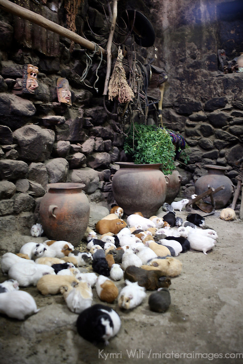 South America, Latin America, Peru, Urubamba Valley. A typical Quechuan home, with guinea pigs in the kitchen, in Ollanta.