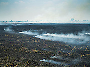 16 MARCH 2016 - BAN SONG, PRACHIN BURI, THAILAND: A dead rice field burns in Prachin Buri province. Some rice fields in the area have dried up because there is not enough water to meet the need for irrigation and domestic use. The drought in Thailand is worsening and has spread to 14 provinces in the agricultural heartland of Thailand. Communities along the Bang Pakong River, which flows into the Gulf of Siam, have been especially hard hit since salt water has intruded into domestic water supplies as far upstream as Prachin Buri, about 100 miles from the mouth of the river at the Gulf of Siam. Water is being trucked to hospitals in the area because they can't use the salty water.    PHOTO BY JACK KURTZ