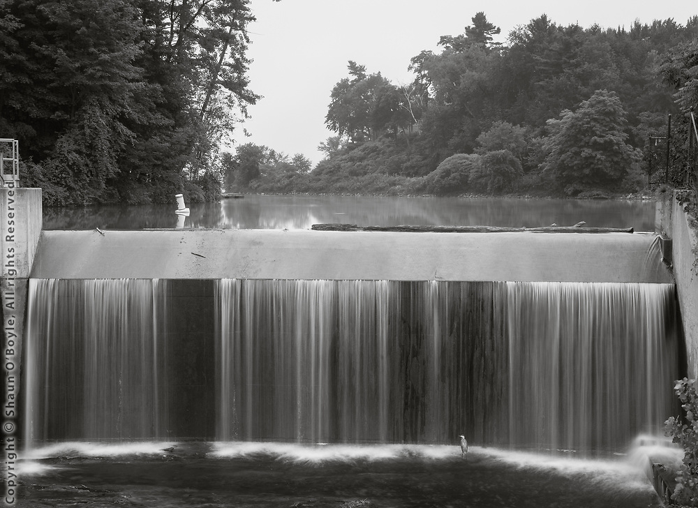 Pontoosuc Lake Dam with Great Blue Heron, West Branch