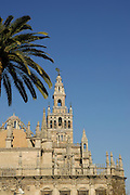 La Giralda,tower of the Sevilla Cathedral (Year 1198), Sevilla,Andalucia,Spain,Europe,