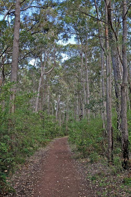 walkway, land, grass, trees, sky, leaves, stems, dryknots