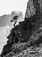 Alpine Scenes