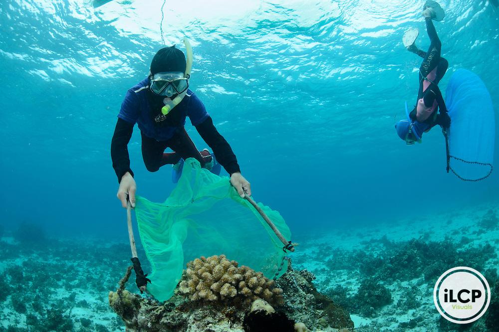 Sustainable aquariun fish collection, Jandayan Island, Danajon Banks, Philippines
