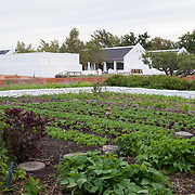 Vegetable Garden looking North towards Babel Restaurant