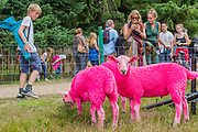 The famous pink sheep - The 2017 Latitude Festival, Henham Park. Suffolk 14 July 2017