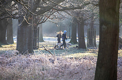 © Licensed to London News Pictures. 19/01/2020. London, UK. Dog walkers enjoy the misty sun in between the trees this morning in Richmond Park, London. Forecasters predict a cold week ahead as Richmond Park issued a warning for ice after last weeks heavy rainfalls. Photo credit: Alex Lentati/LNP