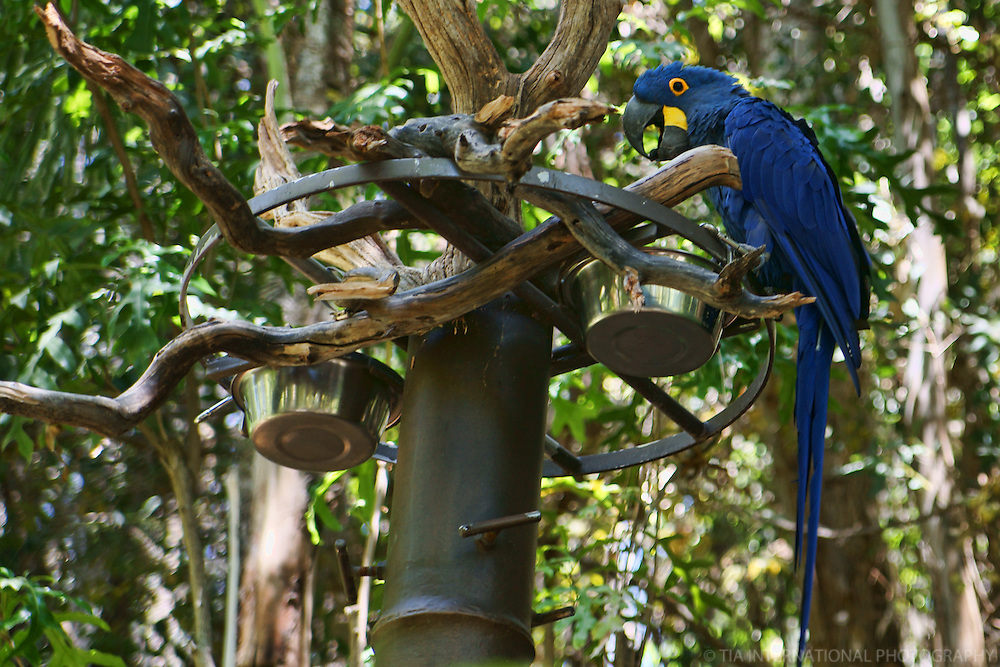 Parrot, San Diego Wild Animal Park