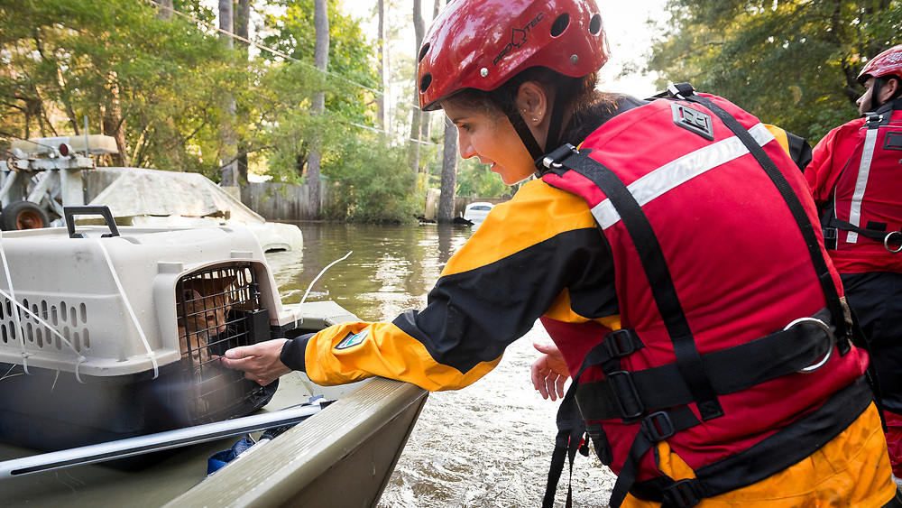 Two rescued kittens are boated to safety by one of the members in The Humane Society Of The United States (HSUS) Animal Rescue Team (ART) operating in Beaumont Texas after Hurricane Harvey caused catastrophic flooding within the Texas coastal regions.<br />
