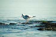 blue sky; seagull; Sea; Wildlife; Nature, water