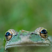 Humanity-Invasive Species