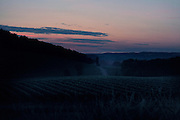 rural hilly landscape vineyard view at dawn France Languedoc Aude Razes