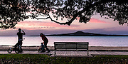 Young family on Tamaki Drive boardwalk at sunset. Father photographing Rangitoto Island, child on ride-on trike. Auckland New Zealand.