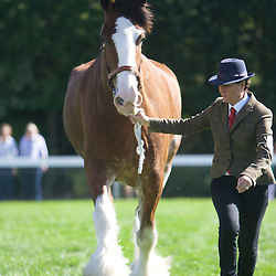 Great Yorkshire Show 2016 Clydesdales
