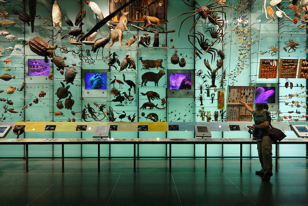 Where Is The Natural History Museum In New York