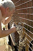 NIJEBERKOOP, THE NETHERLANDS - JULI 22, 2003: PANTERA is a Predatory Animal Care organization in The Netherlands that manages an animal rescue center for feline predators born or raised in captivity. The Pantera Foundation provides the only facility of it's kind in Europe. Pantera was founded in1992 bij Arno van der Valk and his wife Barbera Burgstra. // Arno van der Valk - founder of the Pantera Foundation - is carressing Mira, a young Bengal tiger. // (Photo by  Michel De Groot )