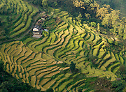 Rice, wheat, maize, millet, potatoes and other crops grow on these steep terraces near Tolka, Nepal.