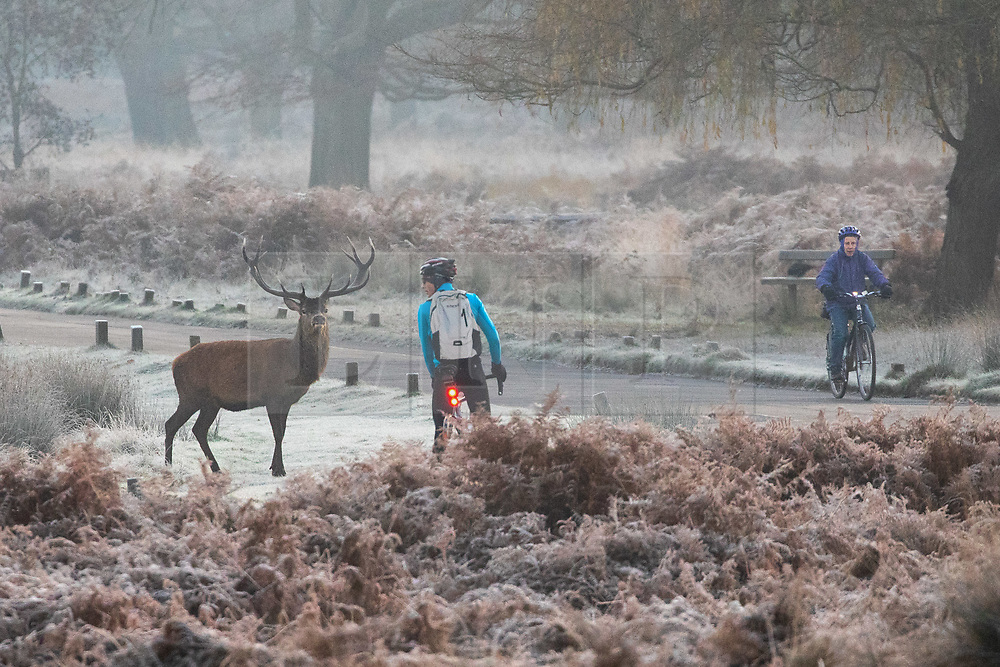 © Licensed to London News Pictures. 02/12/2019. London, UK. Cyclists wait for a deer to cross the road in the frost, at sunrise in Richmond Park, London, as temperatures dropped to below zero degrees Celsius last night in the capital. Photo credit : Tom Nicholson/LNP