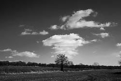 Clouds and tree, Rothley, Leicestershire, England.<br /> Photo: Ed Maynard<br /> 07976 239803<br /> www.edmaynard.com