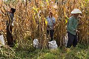 Farmers working in a corfield in Tultepec, México. / Campesinos trabajando en un campo de maíz en Tultepec, México.