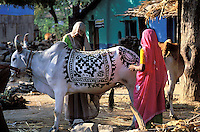 Inde - Rajasthan - Village des environs de Tonk - Femme réalisant des peintures au henné sur une vache pour la fête de Dipawali // India. Rajasthan. Village near Tonk. Woman painting a cow for new year festival (Diwali).