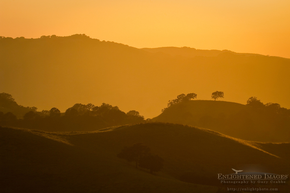 Hills and trees at sunset; Mount Diablo State Park; California