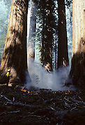 USA, California, Wildland Fire, Forest Fire, Sequoia and Kings Canyon National Park