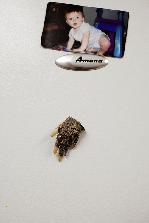 "An alligator foot magnet decorates the fridge next to a  picture of Justin ""JJ"" James Ledet, 1, at Daneco Alligator Farm in Houma, Louisiana on Thursday7, February 18, 2010."